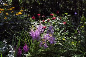 July-5-Perennial-Border-1